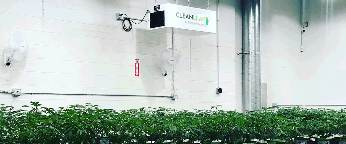 CleanLeaf air cleaner installed in a grow facilitiy.