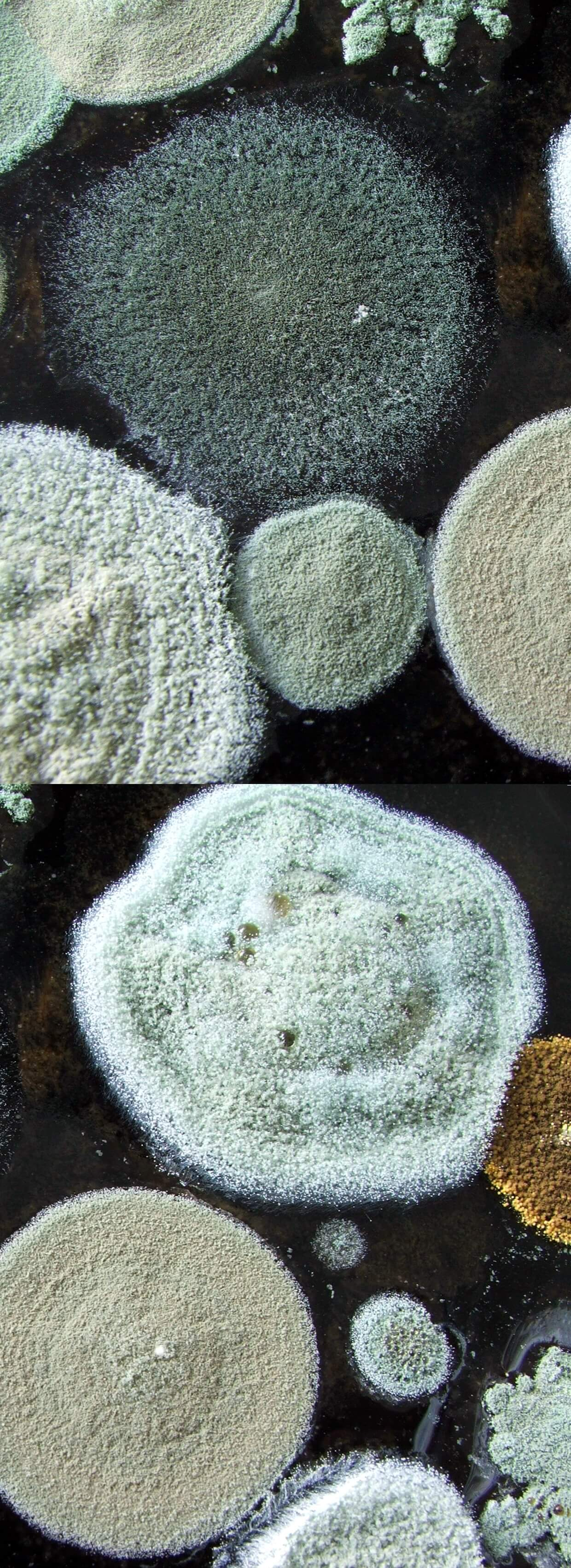 Different types of mold.